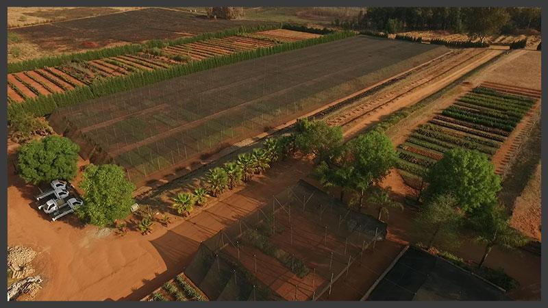 Our 44-acre plant farm